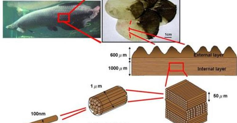 Body Armor Inspired by Piranha-Proof Scales