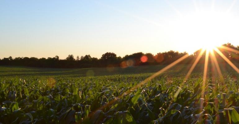 Twittering Earth Plants Talk to the Heavens