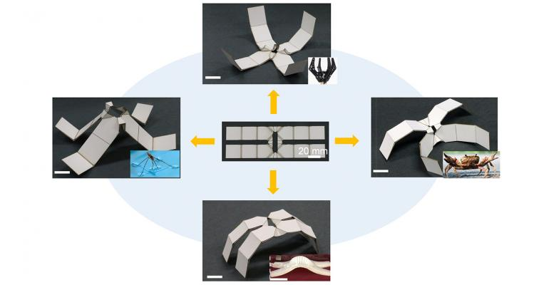 robots, 2D, 3D, Kirigami, North Carolina State University, 2D shapes, 3D structures, materials